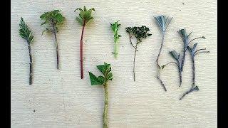 Multiplique Suas Plantas Fazendo Estacas