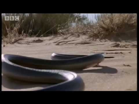 How snakes move &