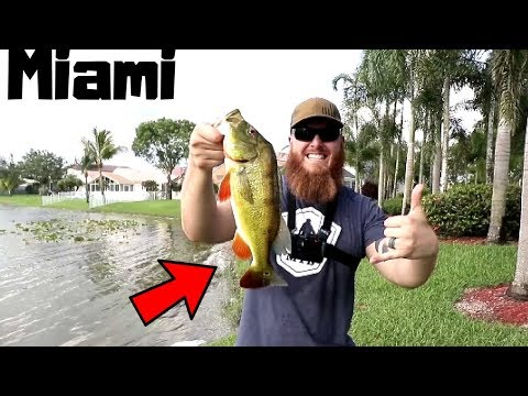 PEACOCK Bass Fishing In MIAMI W/ EXOTIC Fish As Bait?! (ft. Catch Em All Fishing)