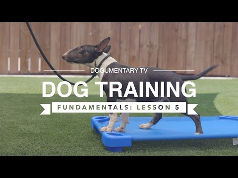 DOG TRAINING FUNDAMENTALS: LESSON 5: HEELING POSITION