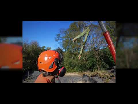 Local Tree Removal Companies Near Me - YouTube