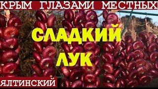 видео Ялтинский лук