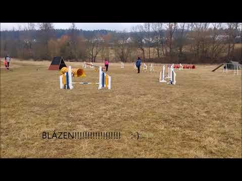 ždírecké jarní dvojzkoušky , 31 3 2018; white swiss shepherd and schipperke