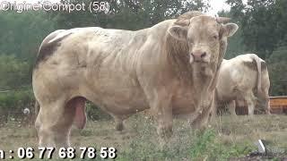 Portes Ouvertes 2018 dans 3 élevages de l'Allier avec Simon Genetic