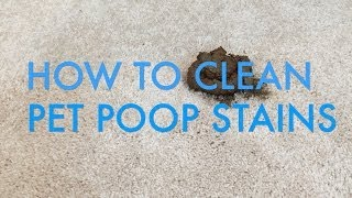 How to Clean Pet Poop Stains from Carpet   Life is Clean