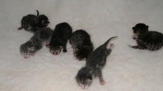 Cat Mia Snow, Newborn Kittens, Season2 Episode3