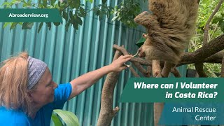 Where can I volunteer in Costa Rica? Review Torri Shafer Animal Rescue Center