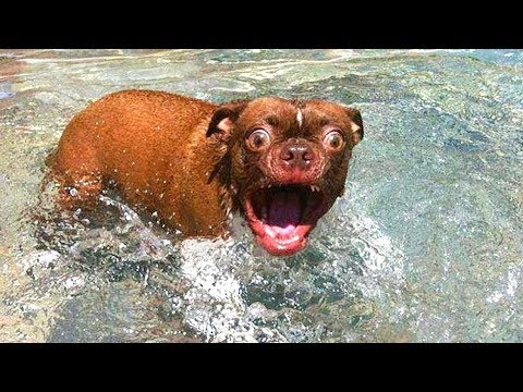 Funniest   Cats and  Dogs  Awesome Funny Pet Videos