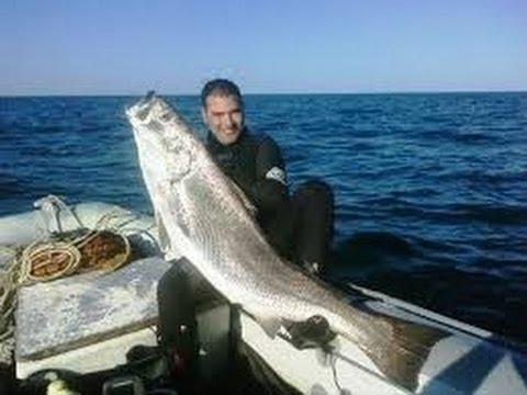 2b9b500523 Pesca in Apnea - L'ombrina Bocca d'Oro Atlantica con J.B.Escaplez - Pesca  submarina - Chasse