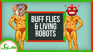 How to Get Buff Without Exercise (If You're a Fly) | SciShow News