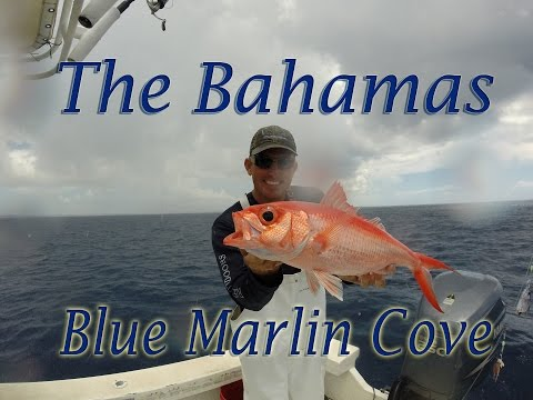 Blue Marlin Cove: Epic trip to the Bahamas!!!