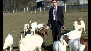 Koze, kozel in Aleš Lisac
