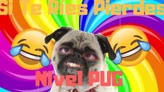Si Te Ríes Pierdes Nivel PUG | Jadu la Pug