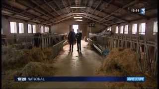 La location de vaches laitières