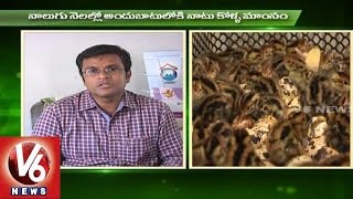 Sagubadi | Country Chicken Farming Techniques | Rajendra Nagar Poultry Research Centre  | V6 News