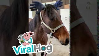 Horse Dons Hilarious Hat || ViralHog
