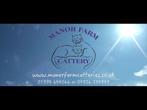 Welcome To Manor Farm Cattery