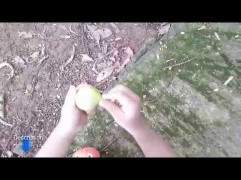 10 Benefits Nutmeg for Natural Health - YouTube
