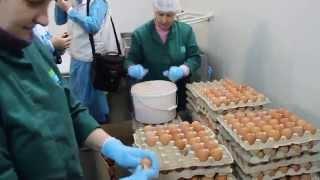 Вот так яйца бить нужно! Как это делают работницы комбината Окраина.