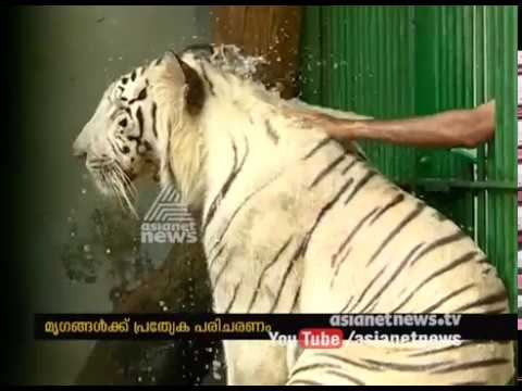 Intense heat in Kerala: Special treatment for animals in Trivandrum zoo