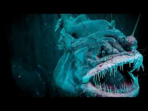 Watch Now! Amazing Angler Fish Facts Mating Fusion