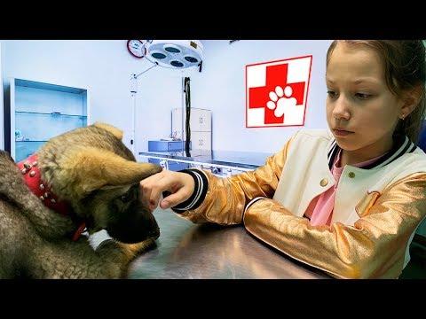 Везем Щенка к Ветеринару Влог / Вики Шоу