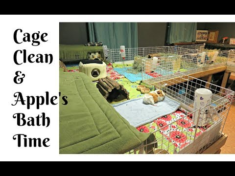 Bath Time & Cleaning Guinea Pig Cages
