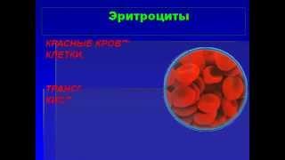 Кровь и остальные компоненты внутренней среды организма.AVI