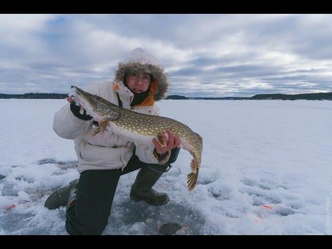 Ловля щуки на жерлицы. Трофей, щука на 4100.  Вот это рыбалка / Catching pike in winter. Big pike- скачать