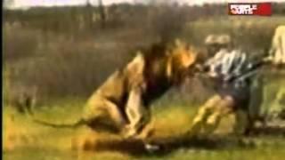 Лев напал на охотников