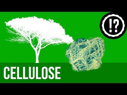 Cellulose einfach erklärt