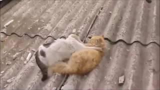 関連動画 おもしろい犬と猫の喧嘩・仲良くない犬と猫たち・おもしろい犬...