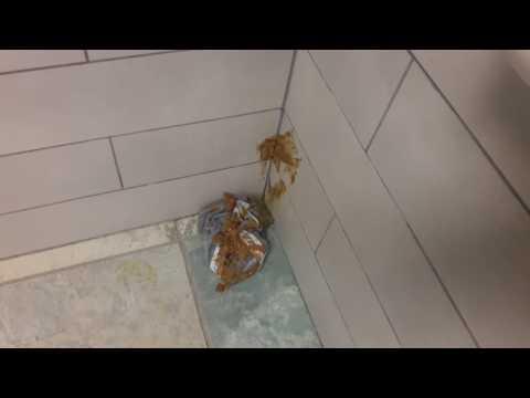 Port Austin Welcome Center restroom incident.