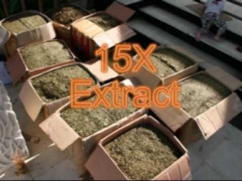 Standardized Kratom – 15x – 15 – X Powder