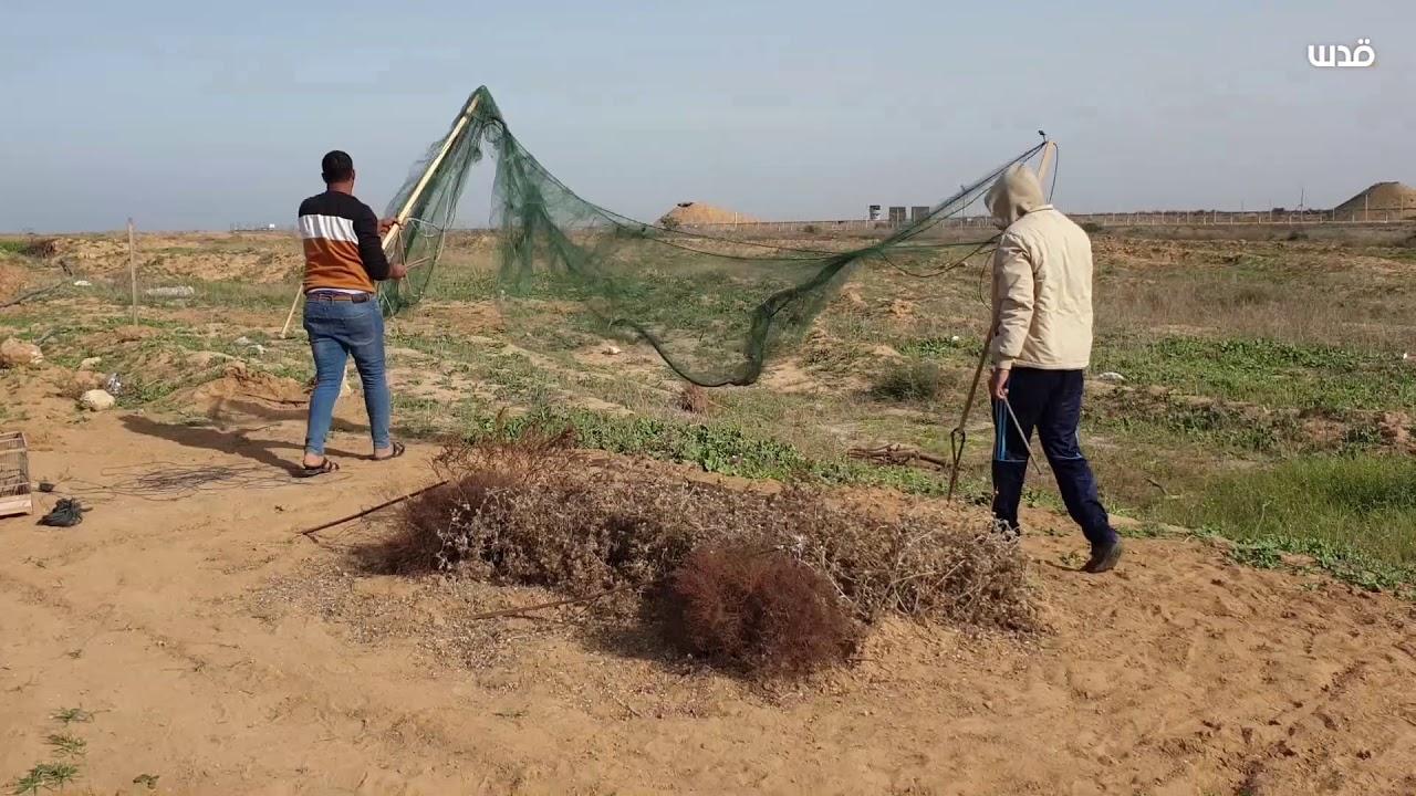 شاهد كيف يعد صياد فلسطيني شبكة صيد الطيور في خانيونس Youtube