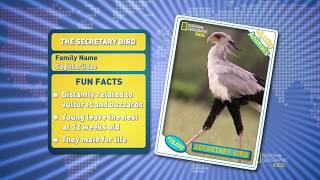 Удивительные животные: Птица-секретарь