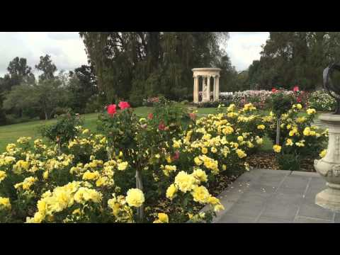 A Visit To The Huntington Rose Garden