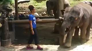 I want more food 😂😂😂🤣 funny girls fails videos with animals