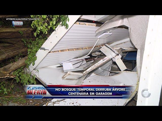 No Bosque: temporal derruba árvore centenária em garage