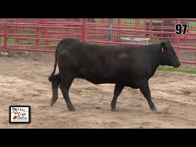 McCall Land and Cattle Lot 97