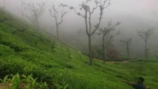 ចំការតែ អូទី_តាមីលណាដួ  Ooty_Tamil Nadu