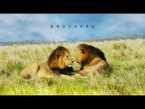 Brothers - Epic Background Music - Sounds Of Power 6