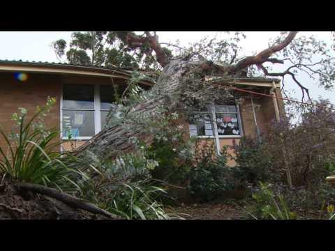 Mount Warrigal Storm Damage
