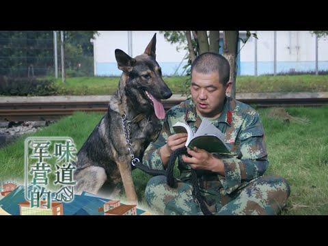 """你的爱犬是我的""""情敌"""""""