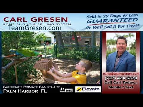 Top #1 Realtor Sales Agent inPalm Harbor Florida