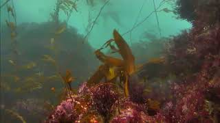 Channel Islands Kelp Forest Cam 01-18-2017 15:22:13 - 15:59:52 thumbnail