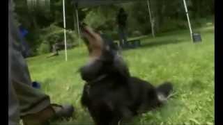 Такса -- порода собак