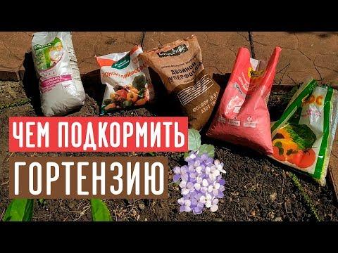 Минеральные удобрения для гортензии / Садовый гид