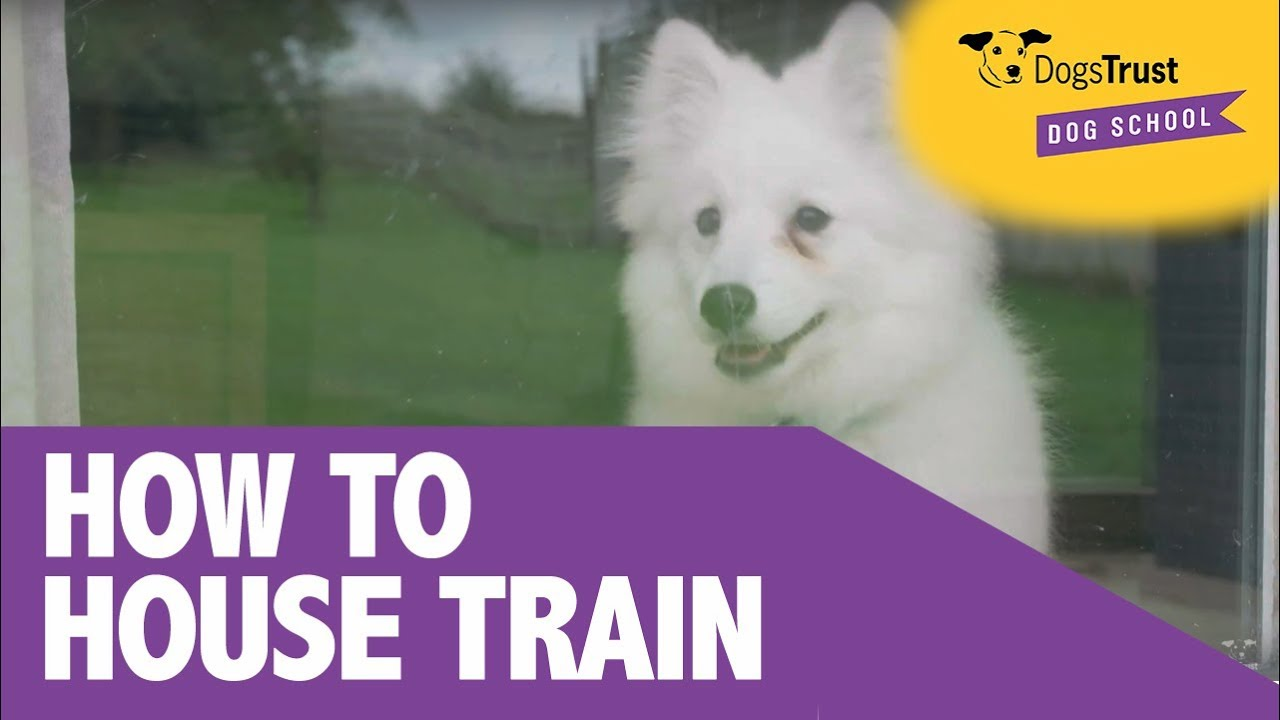 House-Training your dog | Dogs Trust Dog School