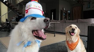 KODA'S 4th BIRTHDAY! (Super Cooper Sunday #105)